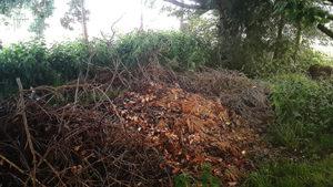dératisation à bruxelles dans un jardin non entretenu avec beaucoup de cachettes pour les rats