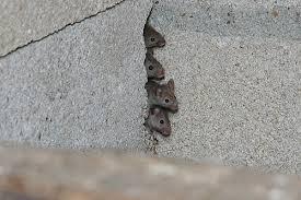 dératisation à lasne, souri set rats éradiqué à lasne, clean vermine entreprise experte