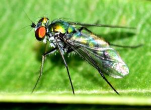 Extermination des mouches par Clean Vermine Désinfection en Belgique et à Bruxelles par nébulisation, fumigation