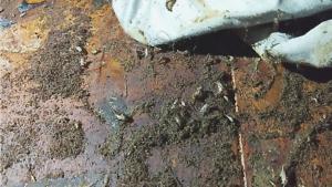 Nettoyage après décès où l'on voit nettement les épanchements de sang et fluides du corps qui ont mordu le plancher à cause de l'acidité et où on voit le développement de vers et larves de mouches