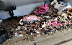 nid de rats sous une cuisine équipée
